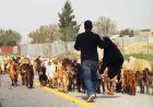израиль бедуины